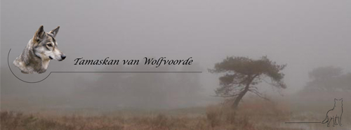 Tamaskan van Wolfvoorde