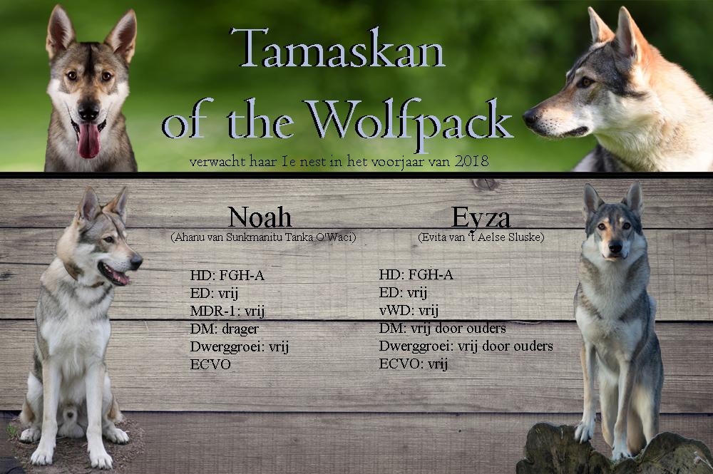 Tamaskan of the Wolfpack